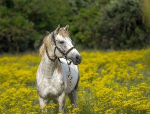 Pferdestriegel kaufen