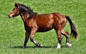Pferdefutter kaufen
