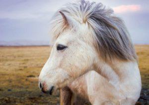 Pferdeleckerli kaufen